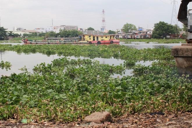 Phát hiện thi thể trên sông Sài Gòn  - ảnh 3
