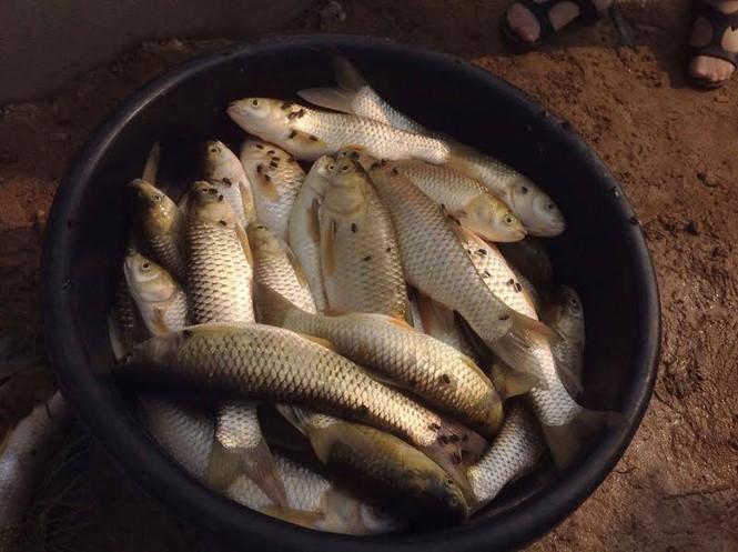 Xác định nguyên nhân cá chết hàng loạt trên sông Bùng - ảnh 1