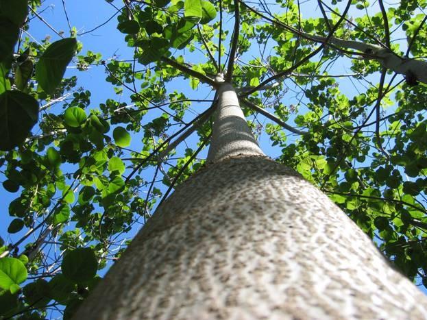 Kinh ngạc 'siêu' cây có thể làm sạch môi trường có ở Việt Nam - ảnh 4