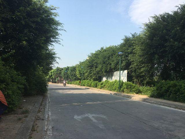 Sự thật rắn độc 'bủa vây' toà chung cư mới ở Hà Nội - ảnh 3