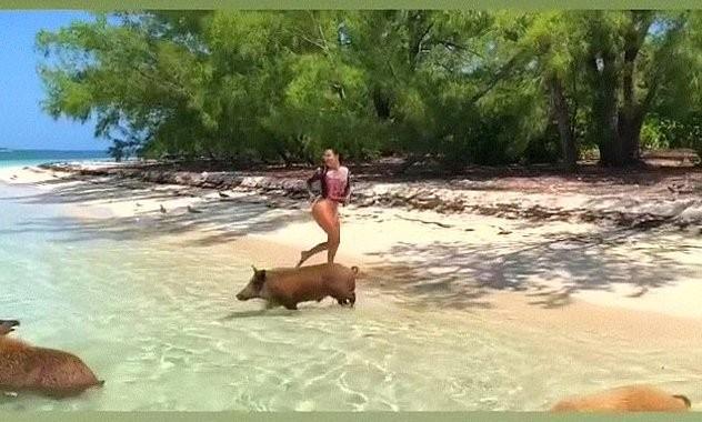 Diện bikini nóng bỏng tắm biển, Kim Kardashian bị đàn lợn 'tấn công' - ảnh 1