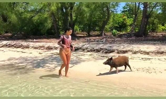 Diện bikini nóng bỏng tắm biển, Kim Kardashian bị đàn lợn 'tấn công' - ảnh 2