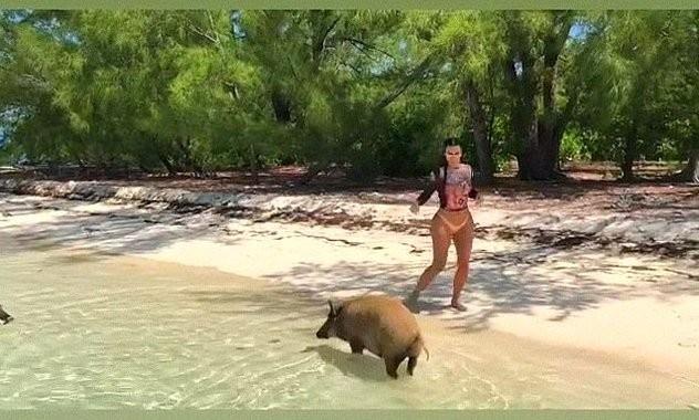 Diện bikini nóng bỏng tắm biển, Kim Kardashian bị đàn lợn 'tấn công' - ảnh 3