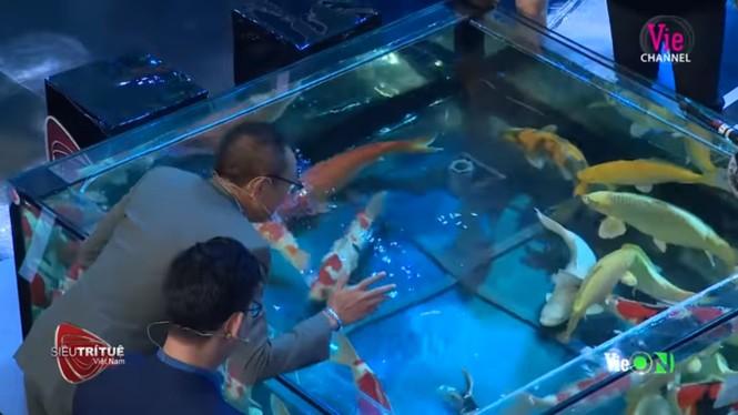 Bất ngờ màn trình diễn hơn 8 tỷ đồng của 'vua cá koi' ở 'Siêu trí tuệ Việt Nam' - ảnh 3