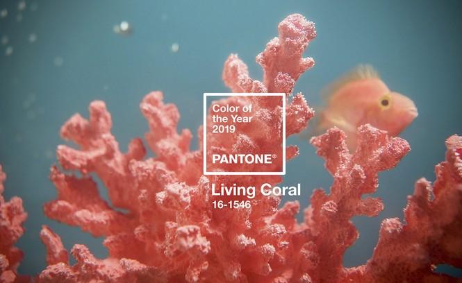 Sắc cam của những rạn san hô - Living Coral là màu sắc chính thức của năm 2019 - ảnh 1