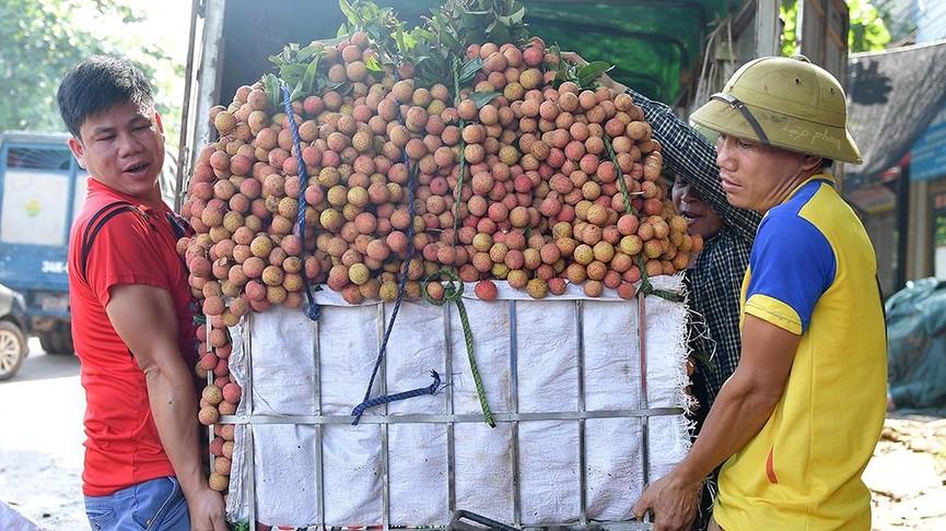 Chôn chân dưới trời nắng tại thủ phủ vải thiều Bắc Giang - ảnh 2