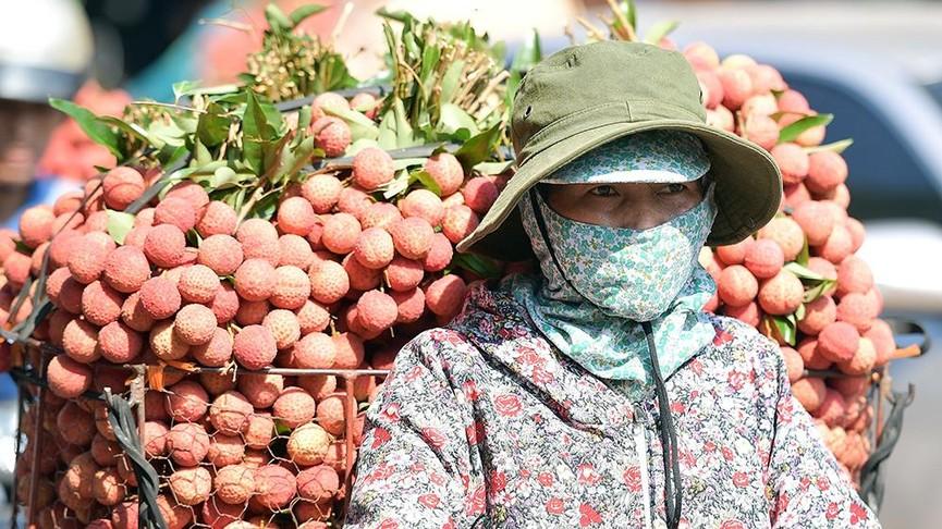 Chôn chân dưới trời nắng tại thủ phủ vải thiều Bắc Giang - ảnh 3