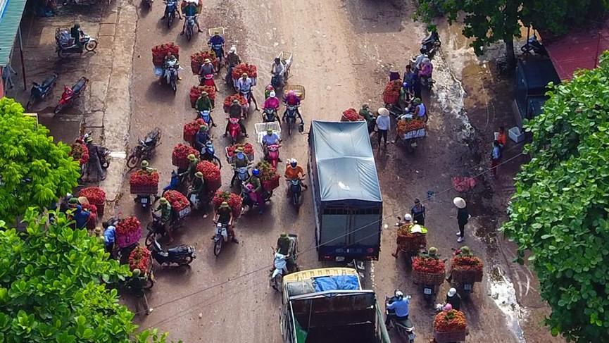 Chôn chân dưới trời nắng tại thủ phủ vải thiều Bắc Giang - ảnh 4