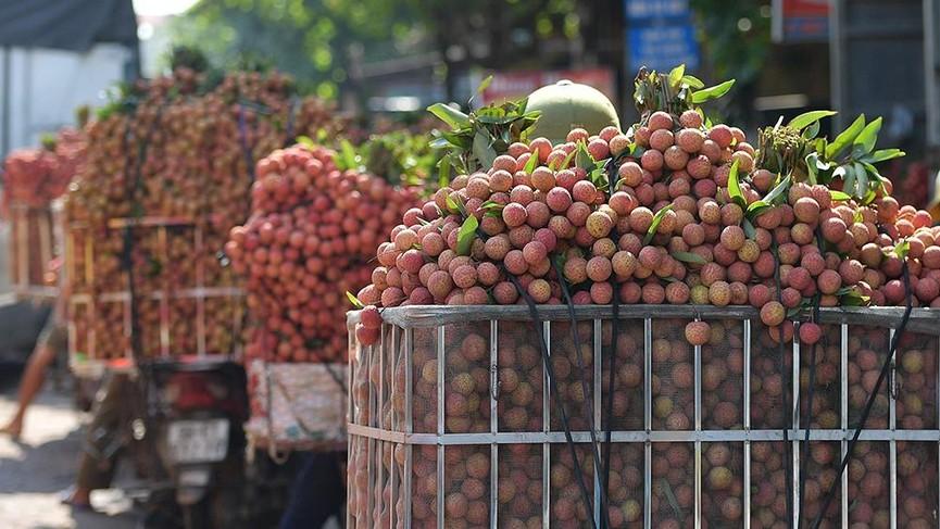 Chôn chân dưới trời nắng tại thủ phủ vải thiều Bắc Giang - ảnh 5