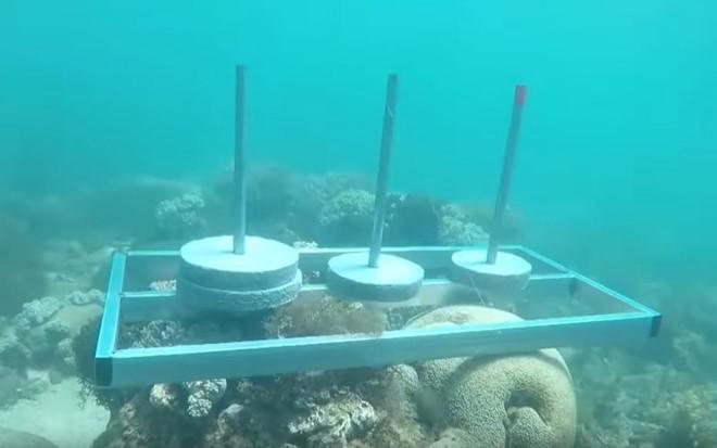 Thử thách lặn biển gây tranh cãi ở Cuộc đua kỳ thú.
