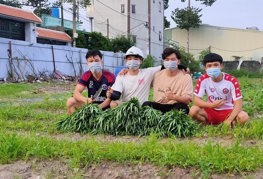 """""""Vườn rau nghĩa tình mùa dịch"""" của bốn chàng sinh viên Bách khoa"""