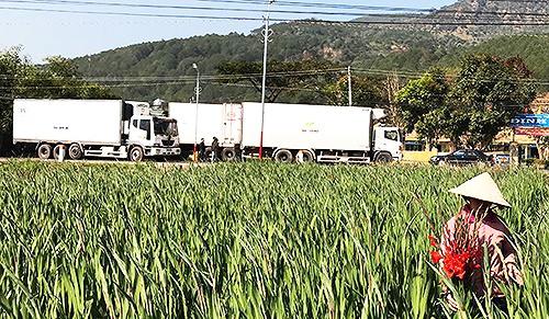 Xe tải tập kết chờ chất hàng tại một làng hoa
