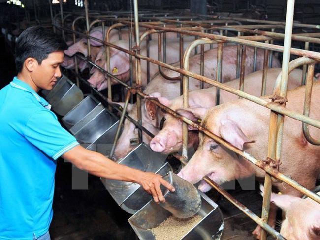 Giá thức ăn chăn nuôi tăng lần thứ 7 liên tiếp