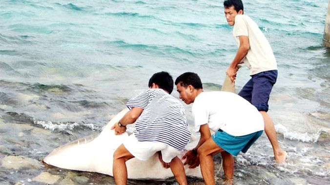 Bộ đội ta bắt sống cá mập trên đảo Tốc Tan. Ảnh: Trần Nguyễn Anh