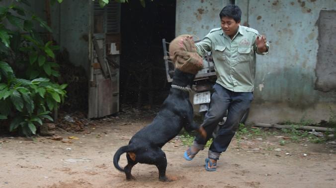 Khi có kẻ giật ví của chủ, Rokky lao đến tấn công lấy lại đem về. Ảnh: N.B
