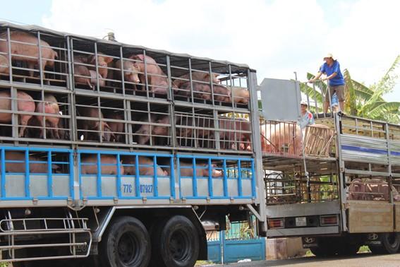 Giá lợn hơi đã giảm trên 10.000 đồng/kg so với lúc cao điểm xuất khẩu ồ ạt sang Trung Quốc hồi tháng 4, đầu tháng 5/2016